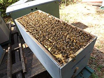 Bees & Beekeeping Supplies – Humboldt County Beekeepers ... - photo#31